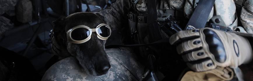 Armeria   -  Gafas Tiro caza, tiro,  municion,  visores